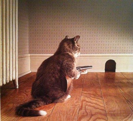 caça ratos